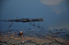 Gevolgen Milieu van Water met Chemische producten en olie wordt vervuild die Royalty-vrije Stock Foto's