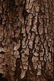 Gevormd van schil van de grunge de donkere boom, houten textuur, aard, installatie B Royalty-vrije Stock Afbeelding