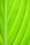 Gevormde bladeren Stock Afbeeldingen
