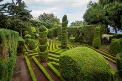 Gevormde groene installaties en voetstappen bij Botanische tuin in Funchal, Madera stock fotografie