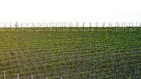 Gevormde Italiaanse wijngaard stock foto