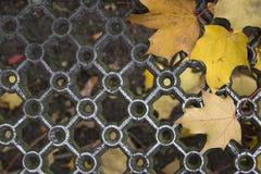Gevormde metaalgrill en natte gele esdoornbladeren royalty-vrije stock afbeelding