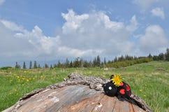 Gevuld lieveheersbeestje, weide, bos stock foto