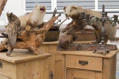 Gevulde die dieren op vlooienmarkt worden gezien Stock Foto's