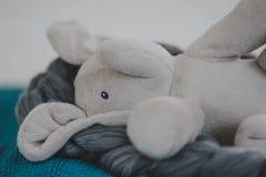 Gevulde olifant stock foto