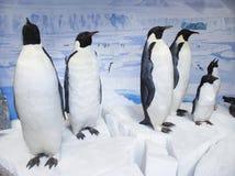Gevulde pinguïntentoonstelling Stock Afbeeldingen