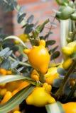Gevulde tomaat Royalty-vrije Stock Afbeeldingen