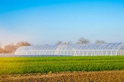 Gewächshäuser auf dem Gebiet für Sämlinge von Ernten, Früchte, Gemüse, leihend zu den Landwirten, Ackerland, Landwirtschaft, länd Lizenzfreie Stockbilder