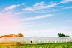 Gewächshäuser auf dem Gebiet für Sämlinge von Ernten, Früchte, Gemüse, leihend zu den Landwirten, Ackerland, Landwirtschaft, länd Stockfotografie