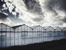 Gewächshäuser in den Niederlanden Lizenzfreies Stockfoto