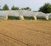 Gewächshäuser für die Bearbeitung des Gemüses Stockfotos