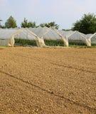 Gewächshäuser für die Bearbeitung des Gemüses im Winter Stockfotos