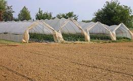 Gewächshäuser für die Bearbeitung des Gemüses im Winter und Lizenzfreie Stockbilder