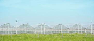 Gewächshäuser für wachsendes Gemüse Stockfoto