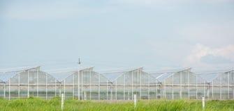 Gewächshäuser für wachsendes Gemüse Lizenzfreie Stockfotos