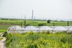 Gewächshäuser für wachsendes Gemüse Lizenzfreies Stockfoto