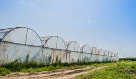 Gewächshäuser für wachsendes Gemüse Lizenzfreie Stockfotografie