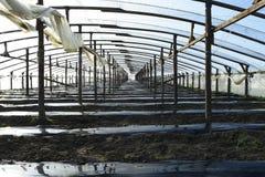 Gewächshäuser gemacht vom Polymerfilm Vorfrühling im Garten gre Stockfotos