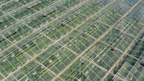 Gewächshäuser mit Gemüse stock video