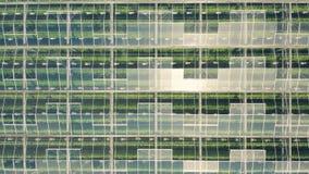 Gewächshäuser mit Gemüse stock footage