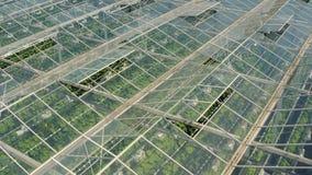 Gewächshäuser mit Gemüse stock video footage