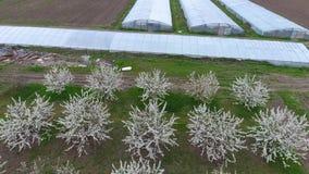 Gewächshäuser sehen von oben an Lange Gewächshäuser für Gemüse stock video footage