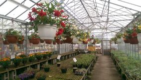Gewächshaus-Anlagen und Blumen für Verkauf Stockbild