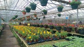 Gewächshaus-Anlagen und Blumen für Verkauf stockfotos