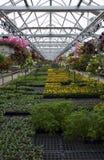 Gewächshaus-Anlagen und Blumen für Verkauf Stockfoto