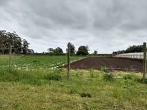 Gewächshaus auf dem Feld angebaut lizenzfreie stockfotografie