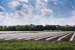 Gewächshaus auf dem Feld mit frühem Gemüse Lizenzfreies Stockfoto