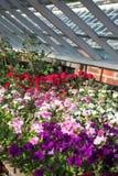 Gewächshaus-Blumen Lizenzfreie Stockfotografie