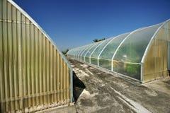 Gewächshaus, das für organisches bewirtschaftet Stockbilder