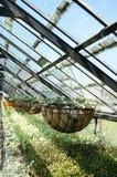 Gewächshaus des Garten-Centers Beetpflanzen verkaufend Stockbild