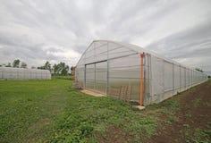 Gewächshaus für die Bearbeitung des Gemüses Stockfotos