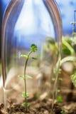 Gewächshaus für junges grünes Wachstum lizenzfreie stockfotografie