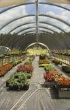 Gewächshaus mit Blumen Lizenzfreie Stockfotografie
