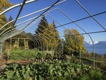 Gewächshaus mit einer Gletscheransicht Lizenzfreie Stockfotos