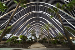 Gewächshaus mit Palmen in der Nachtstadt spanien Stockfoto