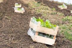 Gewächshaus vorbereitet für das Pflanzen von Blumen Lizenzfreie Stockfotos