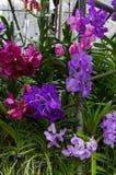 Gewächshausbearbeitung von Orchideen Stockbilder