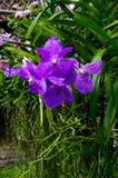Gewächshausbearbeitung von Orchideen Lizenzfreies Stockfoto
