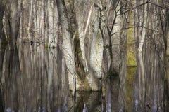 Gewässerte Bäume Stockbilder