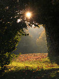 Gewölbter Durchgang im Wald, Ansicht zur sonnigen Freigabe Stockfoto