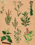 Gewürzpflanze-Gewürze Lizenzfreie Stockfotografie