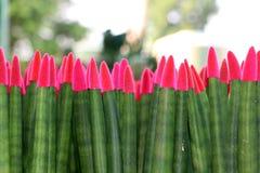 Gewaagd aantrekkelijk bloemenontwerp van een rij van roze en groene bloemen stock foto
