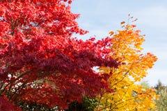 Gewaagde kleuren van loofbomen in de herfst Stock Afbeelding