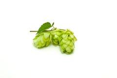 Gewas van hop royalty-vrije stock afbeelding