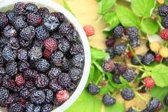 Gewas van zwarte frambozenbessen Rijpe Rubus-occidentalis in emmer Stock Foto's