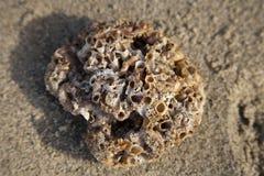 Gewaschen herauf Koralle Lizenzfreie Stockbilder